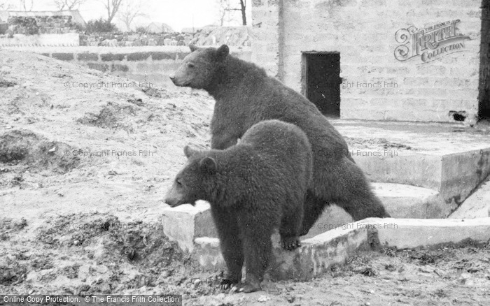 Photo of Chester Zoo, Bears c.1960