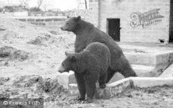 Bears c.1960, Chester Zoo