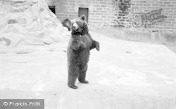 Chester Zoo, Brown Bear 1957