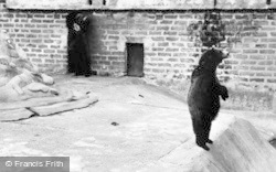Chester Zoo, Brown Bears 1957