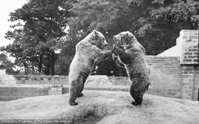 Photo of Chester Zoo, Brown Bears 1957