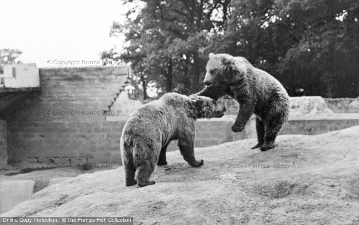 Photo of Chester Zoo, Brown Bears c.1955