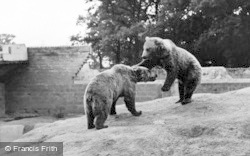 Chester Zoo, Brown Bears c.1955