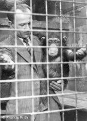 Chester Zoo, Chimpanzee c.1955