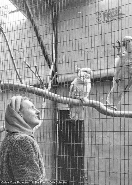Photo of Chester Zoo, Cockatoos c.1950