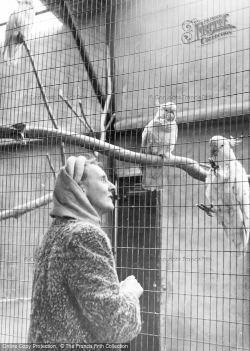 Photo of Chester Zoo, Cockatoos c.1955