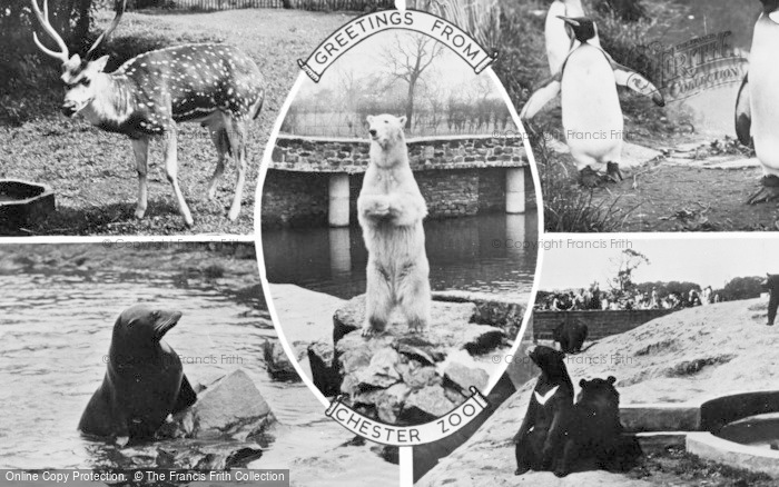 Photo of Chester Zoo, Composite c.1955