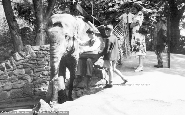 Photo of Chester Zoo, Elephant Riding c.1950
