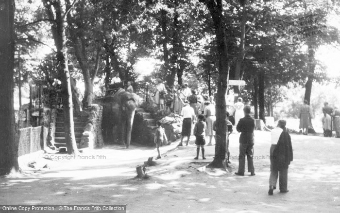 Photo of Chester Zoo, Elephant Riding c.1950