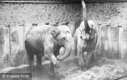 Chester Zoo, Elephants c.1955