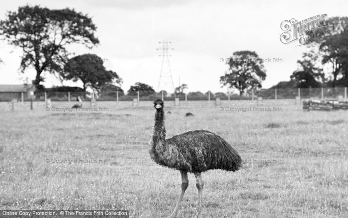 Photo of Chester Zoo, Emu And Wallaby Enclosure 1957