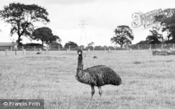 Chester Zoo, Emu And Wallaby Enclosure 1957