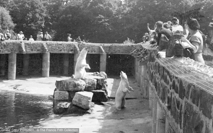 Photo of Chester Zoo, Feeding The Polar Bears c.1950