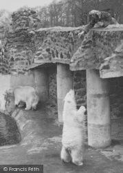 Feeding The Polar Bears c.1950, Chester Zoo