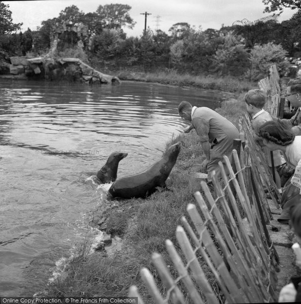 Photo of Chester Zoo, Feeding The Sea Lion 1957