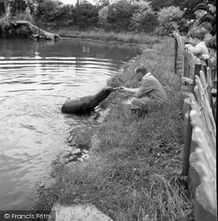 Chester Zoo, Feeding The Sea Lion 1957