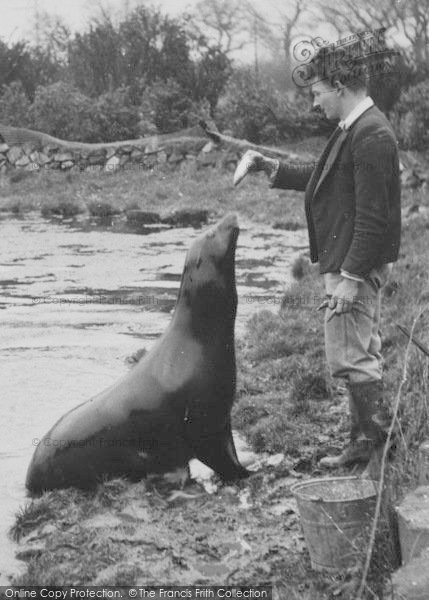 Photo of Chester Zoo, Feeding The Sea Lion c.1950