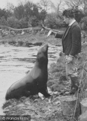 Chester Zoo, Feeding The Sea Lion c.1950