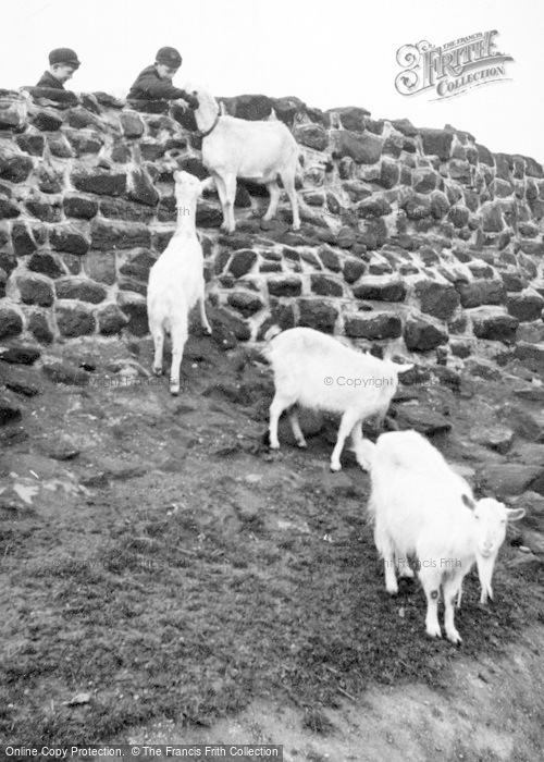 Photo of Chester Zoo, Goats c.1955
