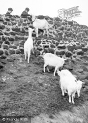 Chester Zoo, Goats c.1955