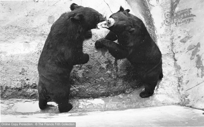 Photo of Chester Zoo, Himalayan Bears 1957