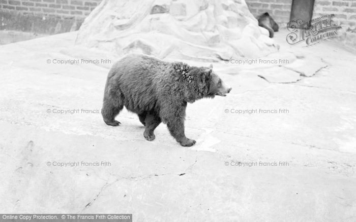 Photo of Chester Zoo, Himalayan Bears 1957