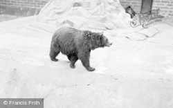 Chester Zoo, Himalayan Bears 1957