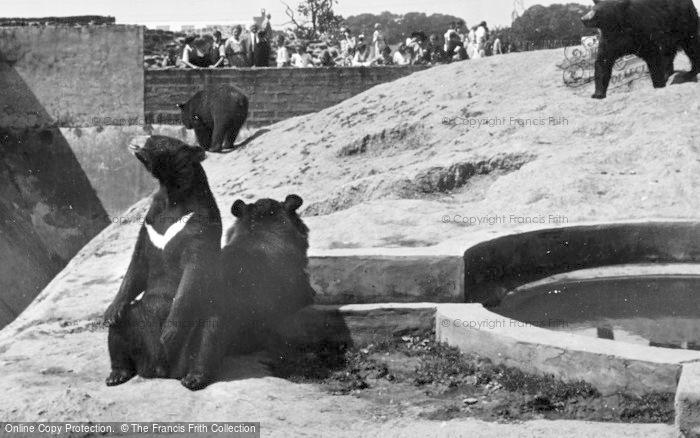 Photo of Chester Zoo, Himalayan Bears c.1950