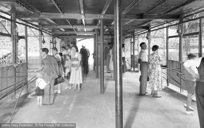 Photo of Chester Zoo, Interior Of The Zebra House c.1950