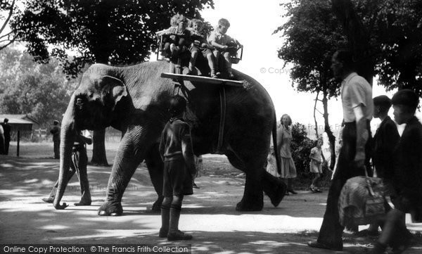Photo of Chester Zoo, Molly The Elephant Steps Out c.1950