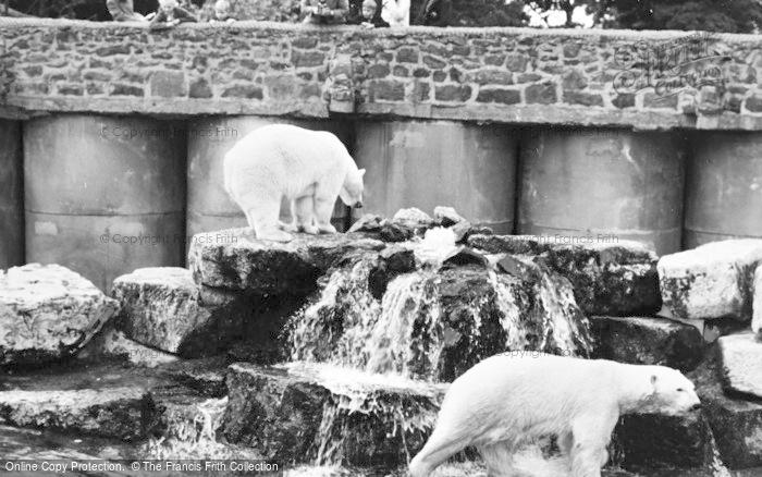 Photo of Chester Zoo, Polar Bears 1957