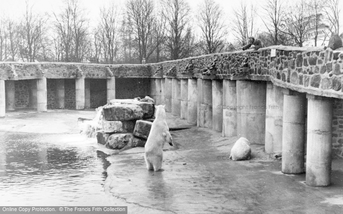 Photo of Chester Zoo, Polar Bears c.1960