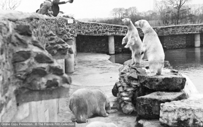 Photo of Chester Zoo, Rack, Ruin And Rubble The Polar Bears c.1950