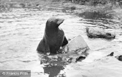Chester Zoo, Sammy The Sea Lion c.1955
