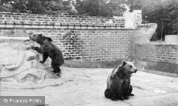 Chester Zoo, The Brown Bears c.1955