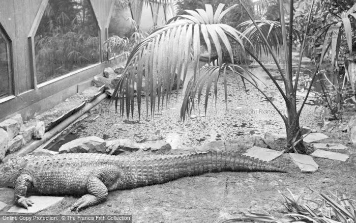Photo of Chester Zoo, The Crocodile c.1950