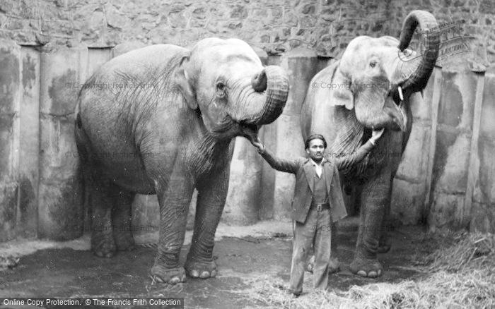 Photo of Chester Zoo, The Elephants c.1950