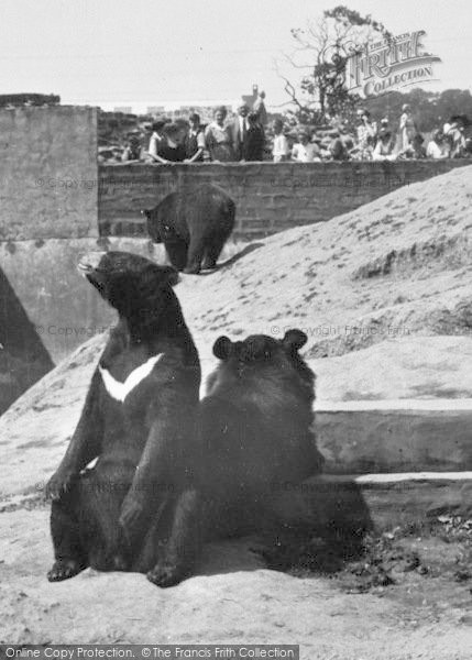 Photo of Chester Zoo, The Himalayan Bears c.1950