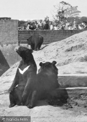 Chester Zoo, The Himalayan Bears c.1950