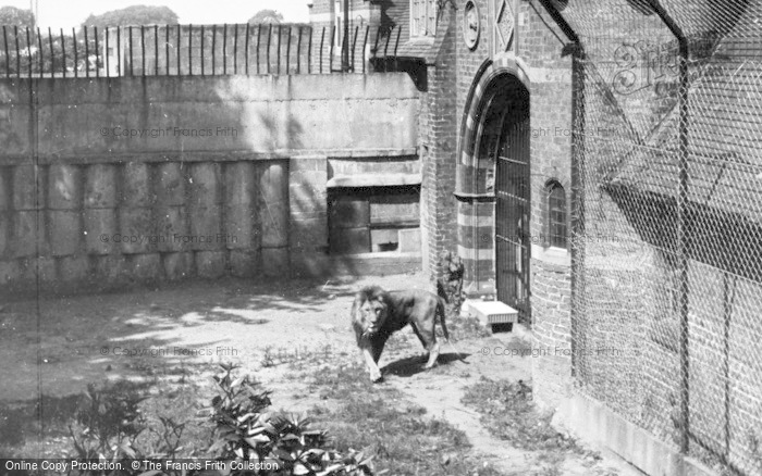 Photo of Chester Zoo, The Lions Den c.1950