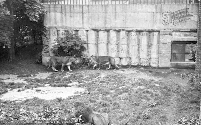 Photo of Chester Zoo, The Lions Den c.1955