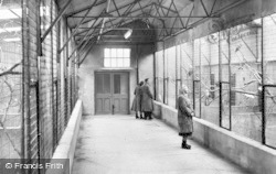 Chester Zoo, The Parrot House c.1955