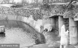 The Polar Bears c.1950, Chester Zoo