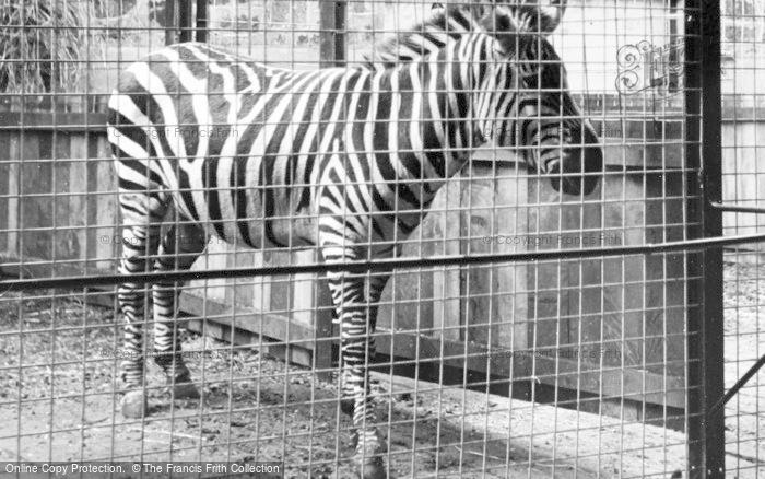 Photo of Chester Zoo, The Zebra c.1950