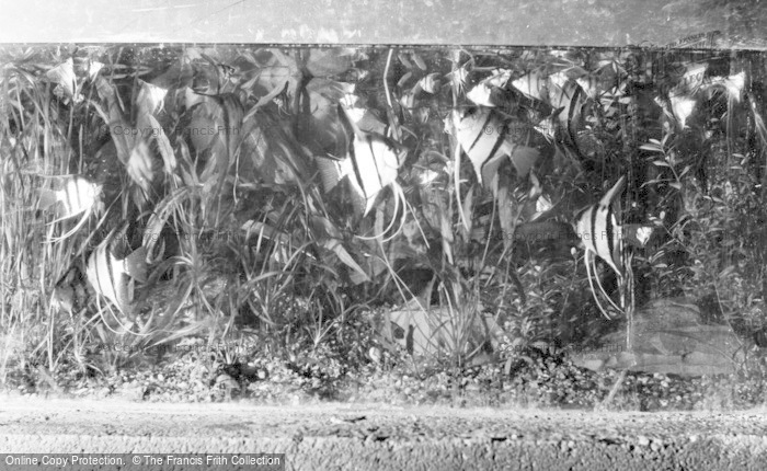 Photo of Chester Zoo, Tropical Fish c.1960