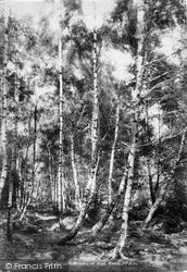 Chingford, View At High Beech 1903