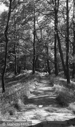 Chorley, Astley Park Woods c.1965
