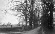 Churston Ferrers, Avenue and Church 1904