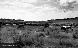 General View Of The Hills c.1955, Clanfield