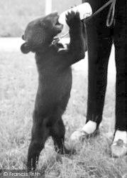 Cleethorpes Zoo, Baby Bear c.1965